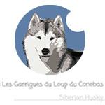 création de flyers et affiches à brioude agence web 43